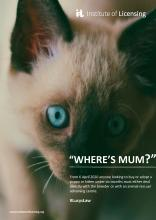 Wheres Mum? Cat2